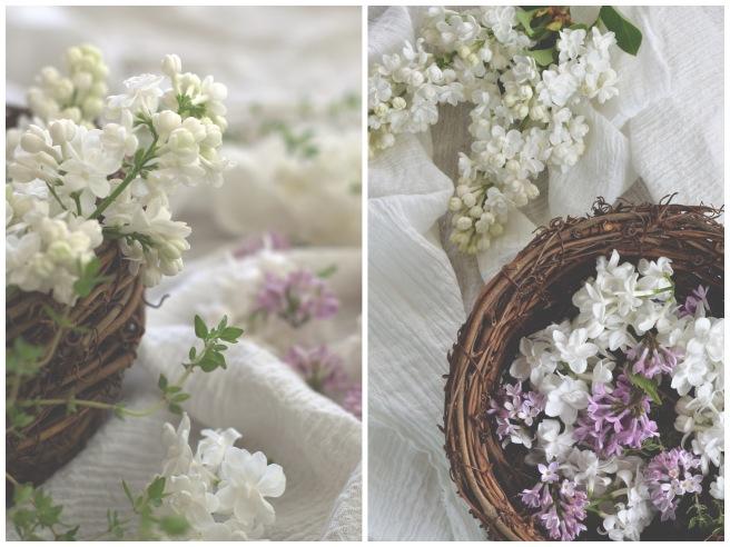 white lilacs, conifères et feuillus