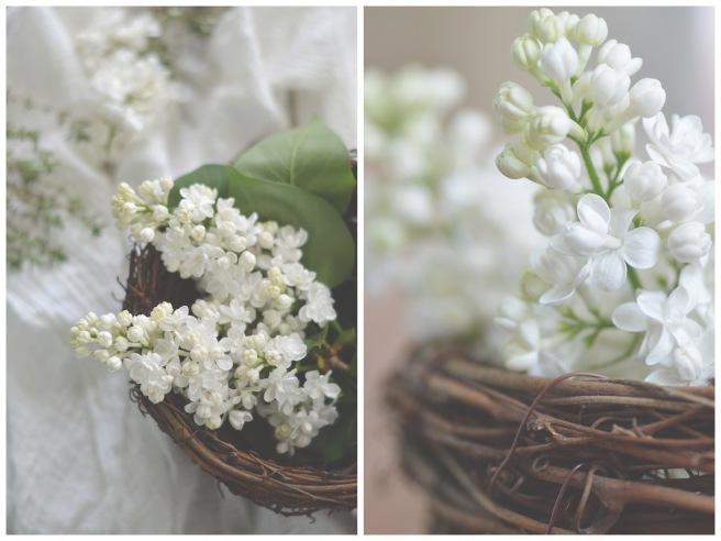 white lilacs, conifères et feuillus; food photography