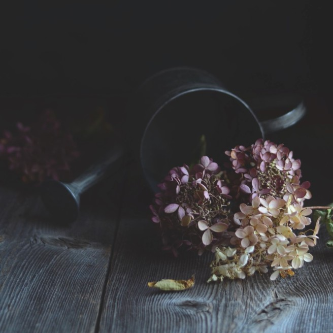 Dried Hydrangeas | conifères & feuillus