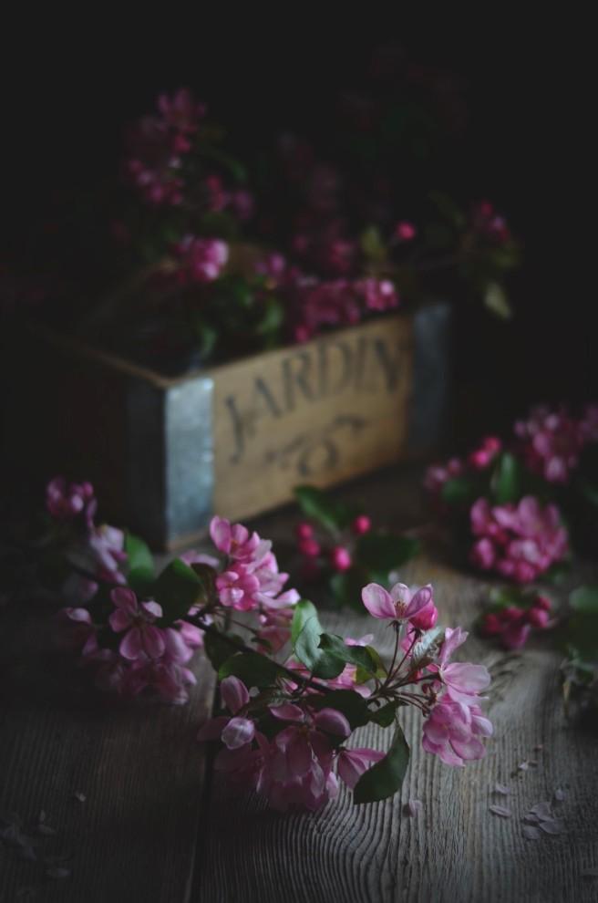 crabapple blossoms | conifères & feuillus