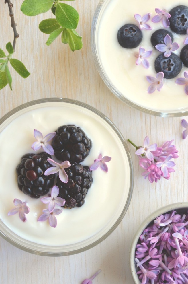 labneh with lilacs and berries | conifères et feuillus