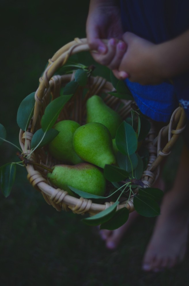 Pear Picking | conifères & feuillus