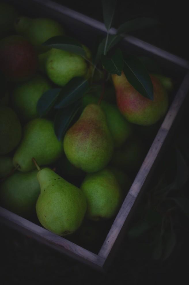 Harvesting Pears | conifères & feuillus