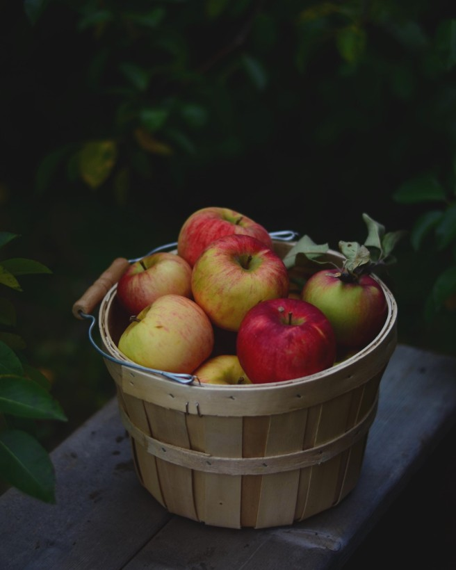 apple picking | conifères & feuillus