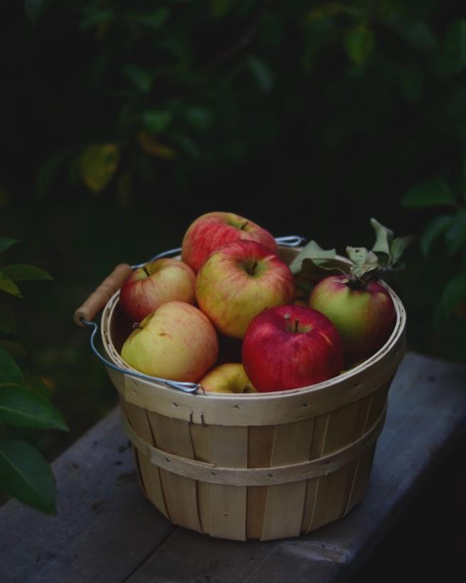 apple picking | conifères & feuillus