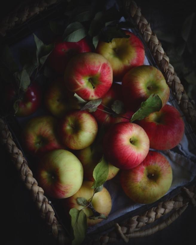 apples | conifères & feuillus